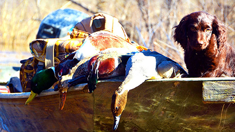 Arkansas Duck Masters Guide Services